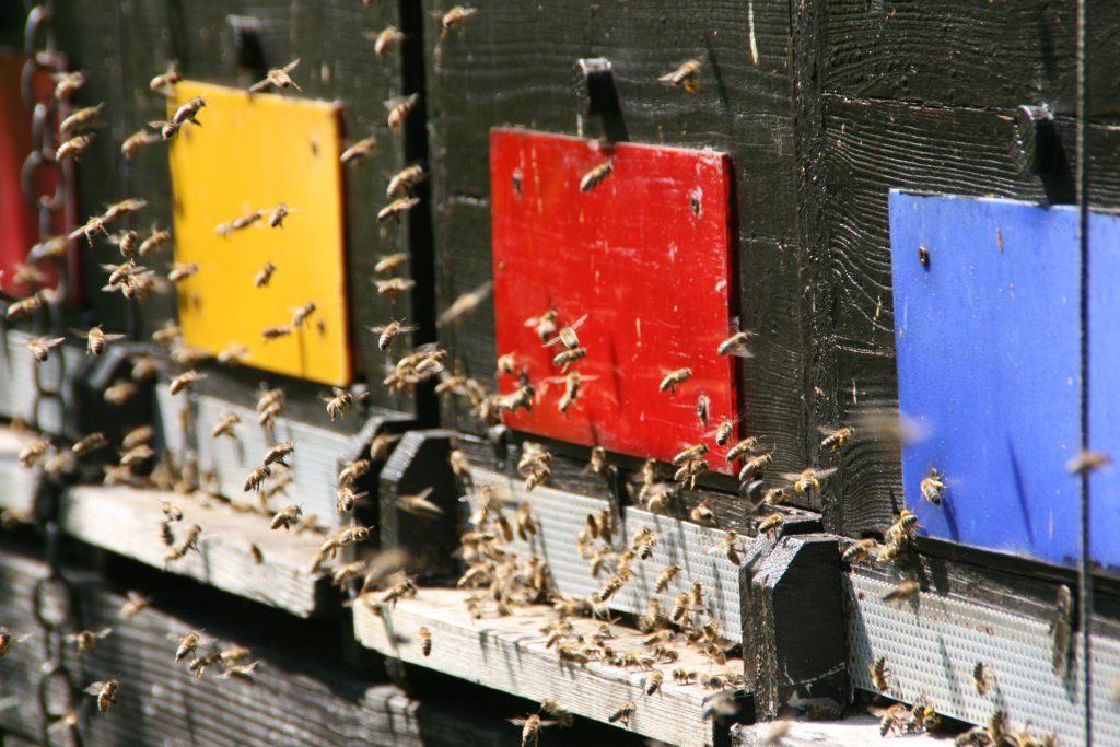 offener Bienenstock